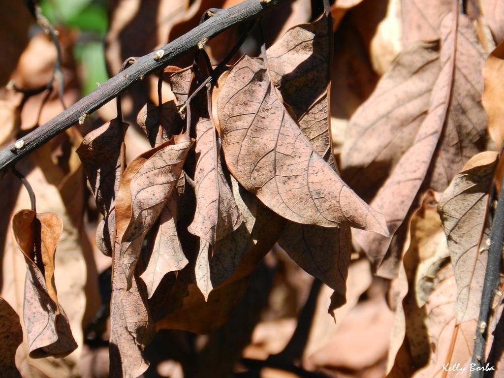 Folhas secas 2