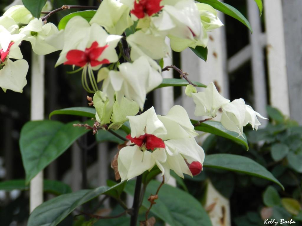 Flores brancas e vermelhas