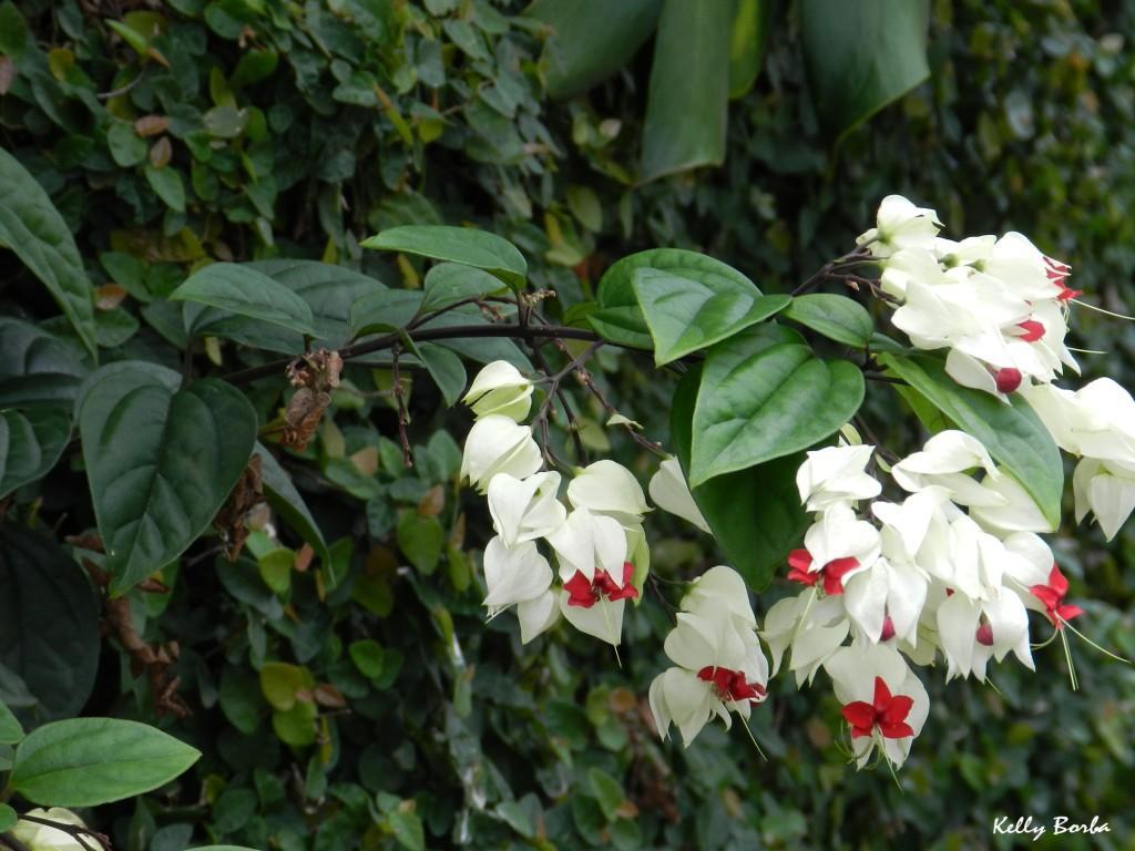 Flores brancas e vermelhas 2