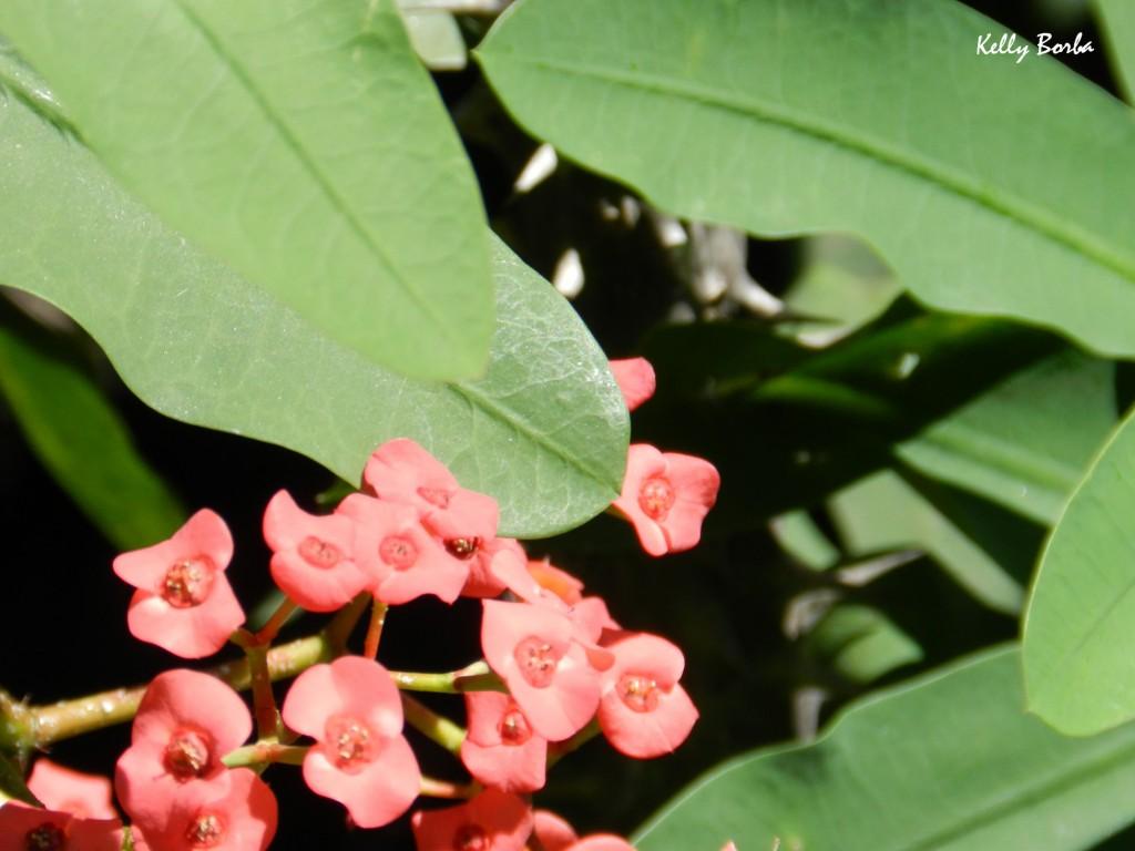 Florzinha vermelha