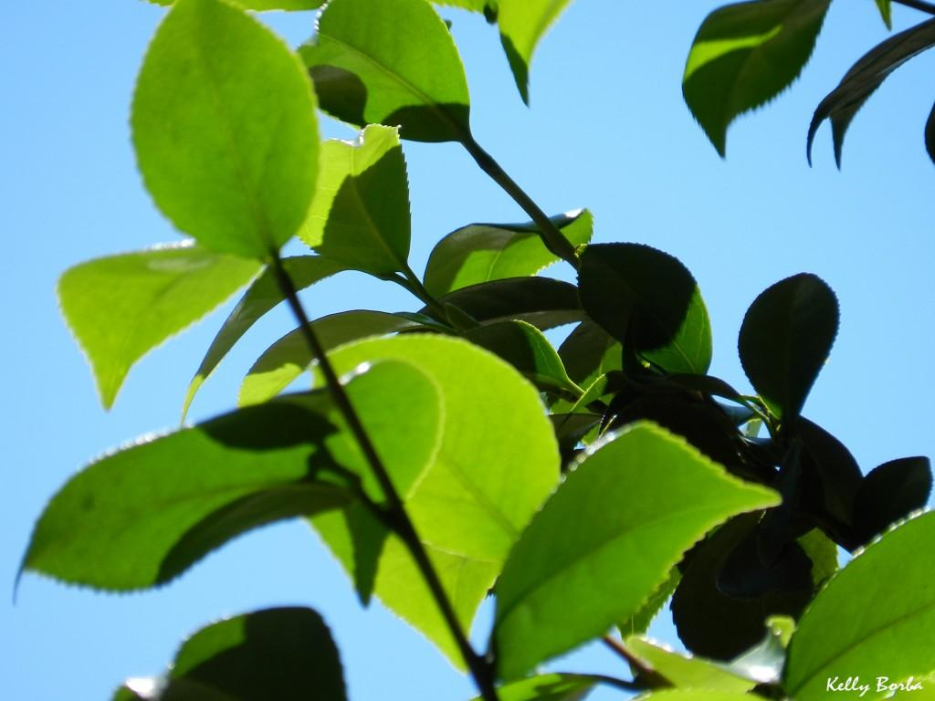 Folhas verdes 2