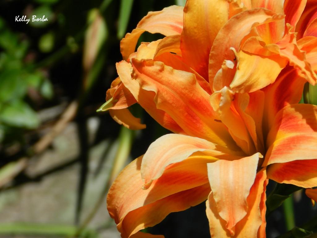 Flor laranja 2