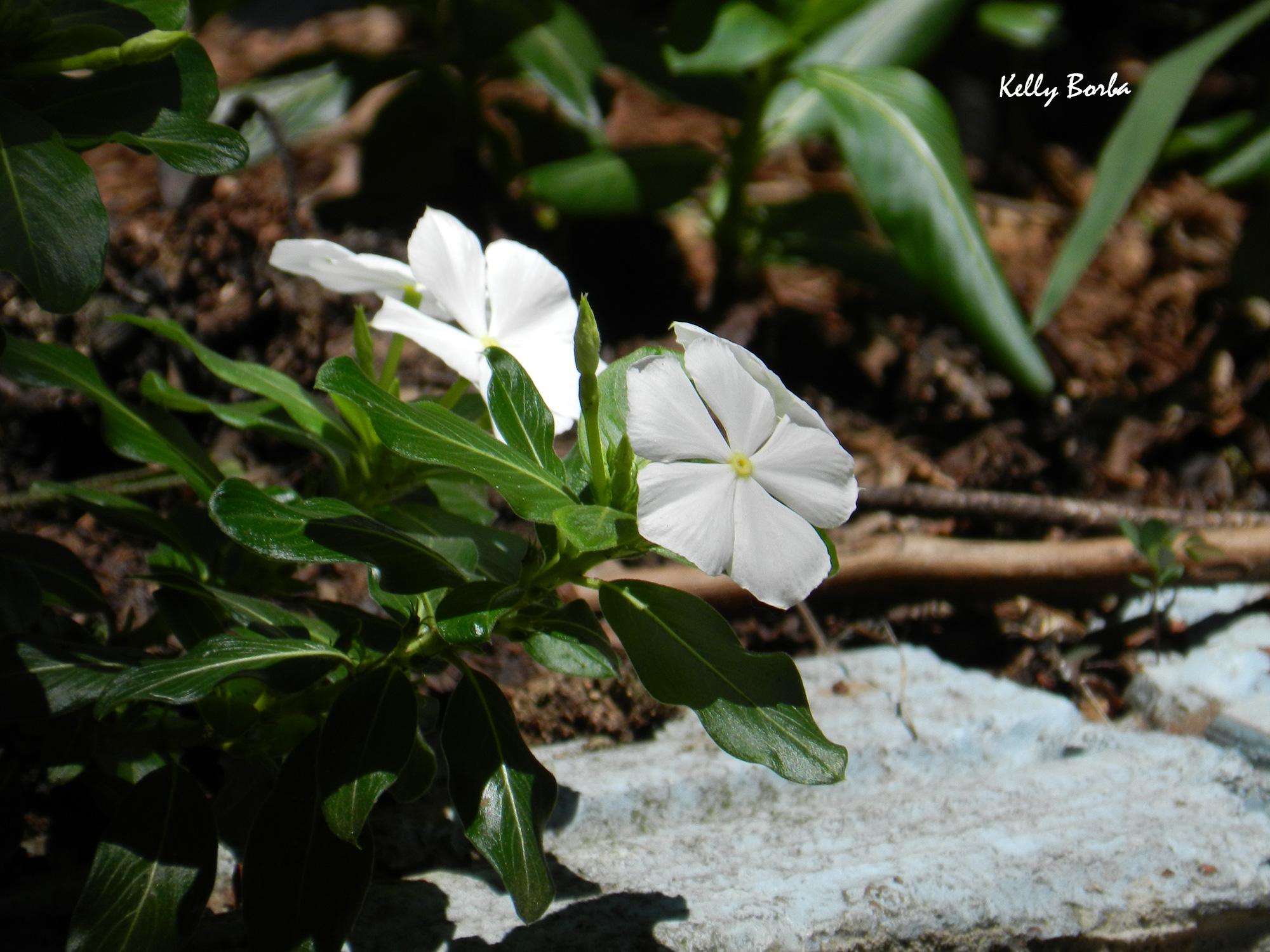 Florzinha branca