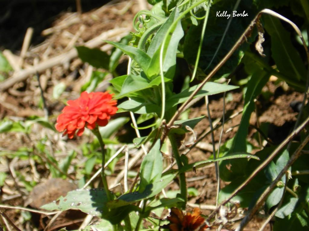 Flor laranja-ferrugem