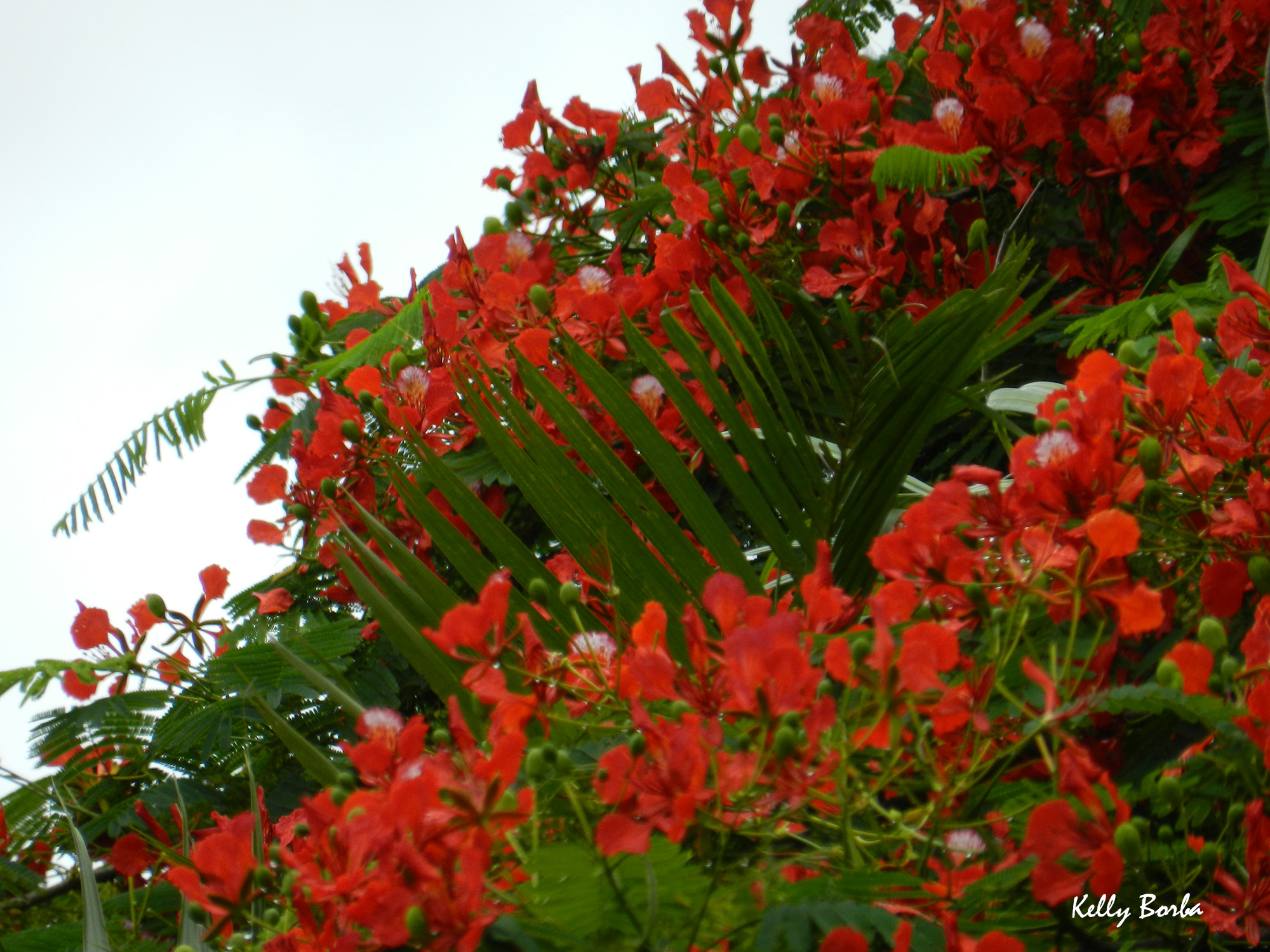jardim rosas vermelhas:Flores vermelhas