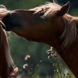 Centro Equestre – Haras